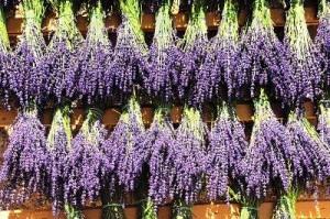 profitable lavender bouquets