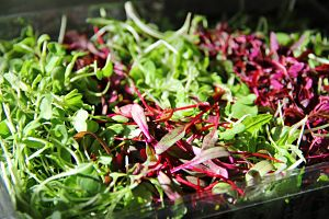 profitable microgreens
