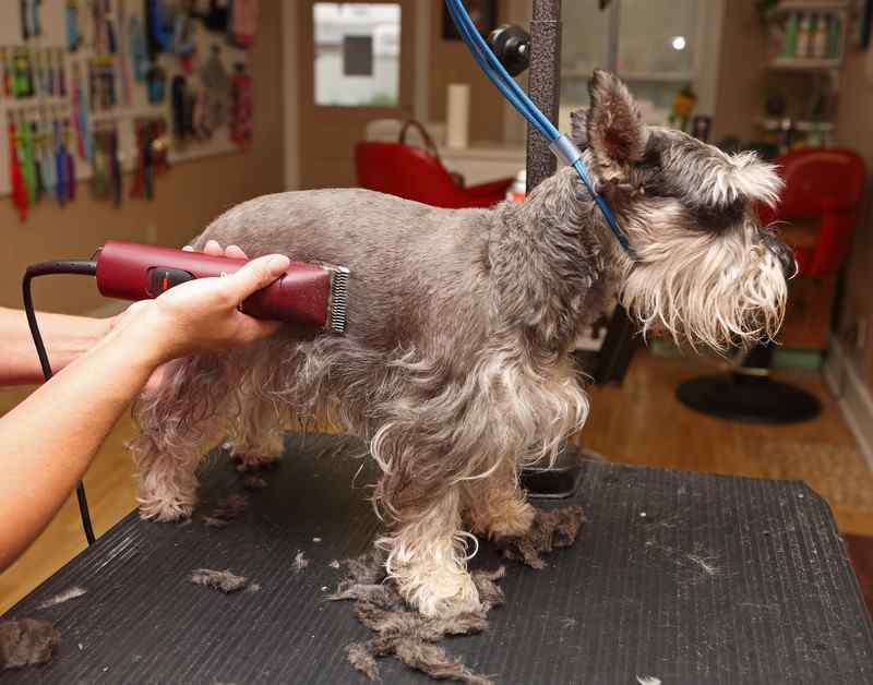 Start a dog grooming business extra income over 55 dog grooming business solutioingenieria Images