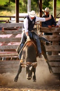 equine photography business