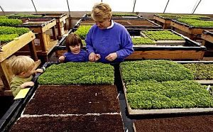 profitable micro greens