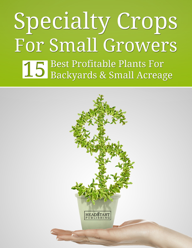 Grow Trees For Profit Extra Income Over 55