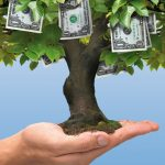 5 Profitable Trees For Backyard Growers