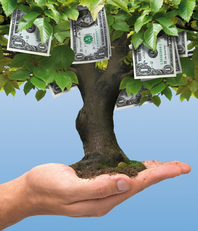 5 Profitable Trees For Backyard Growers Extra Income Over 55