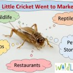 Raising Insects For Profit